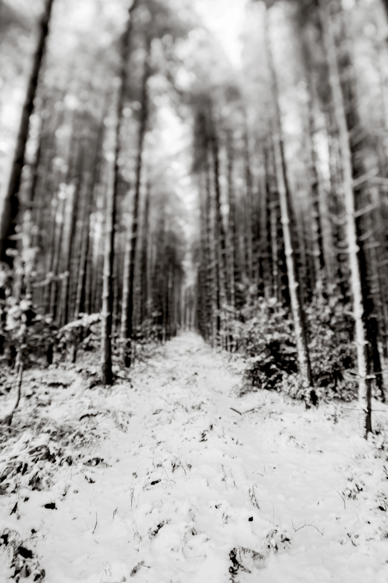 Photographing Snow. Photography Tips for Beginners